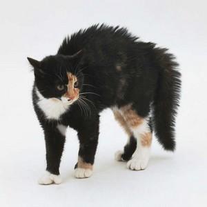 Kitty Dislikes Cats and Vet, Cat Upset by Dog
