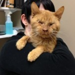 Ray's Story: Rescuers Appeal for Help for A Cat in Need