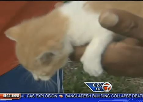 FL Firefighters and Deputies Rescue Kitten Trapped in Wall
