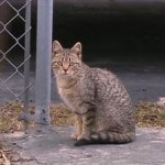 Ohio Town's Police Investigated on Allegation They trapped and Killed Cats