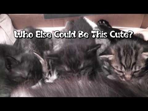 Cutest Kitten Ear Wiggles Ever!
