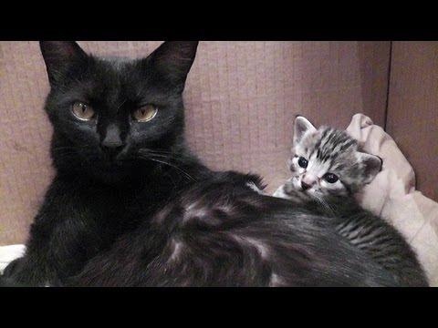 In Praise Of Mama Cat