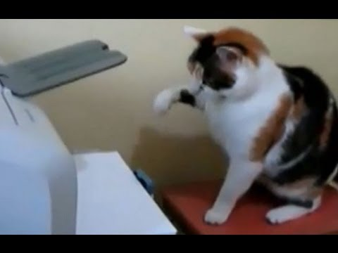 Cats vs Printers Compilation