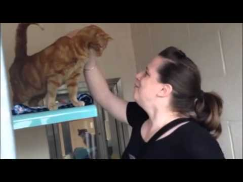 Max the Cat is Reunited with Sally