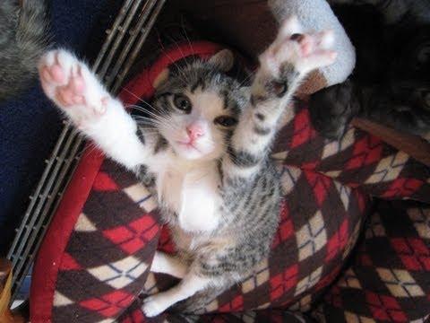 Random Kitten Cuteness 2