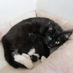 Stray Cat Enters Home and Has Kittens Under Boy's Bed