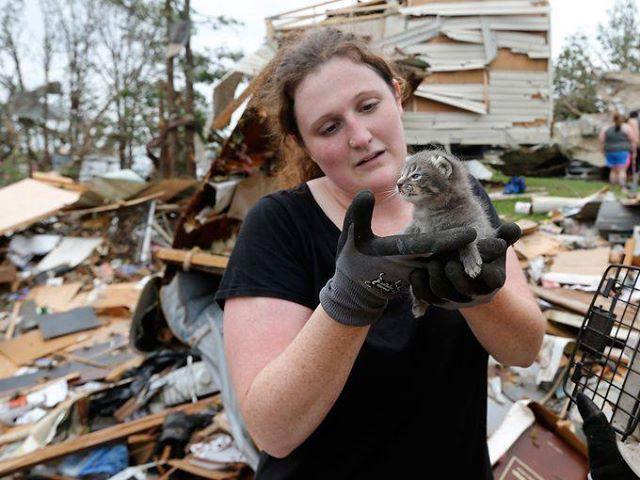 Oklahoma Tornado Pet Rescue Efforts Begin Amid Widespread Destruction Life With Cats