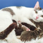 Mama Cat Breaks into Prison and Gives Birth to Her Kittens