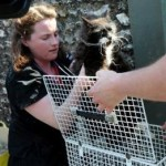 Huge Effort Including Earthquake Rescue Team Saves Trapped Cat