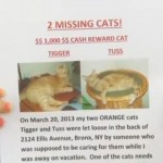 Bronx Woman Searches for Missing Cats Dumped by Petsitter