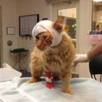 Injured Tornado Cat's Family is Found