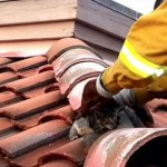 Firefighters Rescue Kitten From Roof