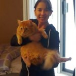 Ninja the Cat is Found Two Days After Accidental 11 Story Fall