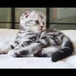 A Kitten's First 30 Days