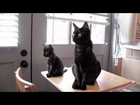 Goodbye Kitty Cate & Kittens