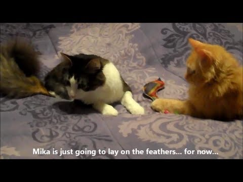 Anakin & Mika Play with the Feather Toy