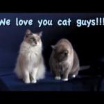 Why We Love Cat Guys