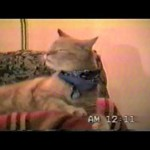 Cat Sings Along to Bob Seger Old Time Rock and Roll