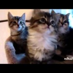 Synchronized Cats Compilation