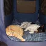 Cat and Dog Bond in Grief and Remembrance for Recently Deceased Sibling