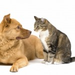 cat and dogqwqw