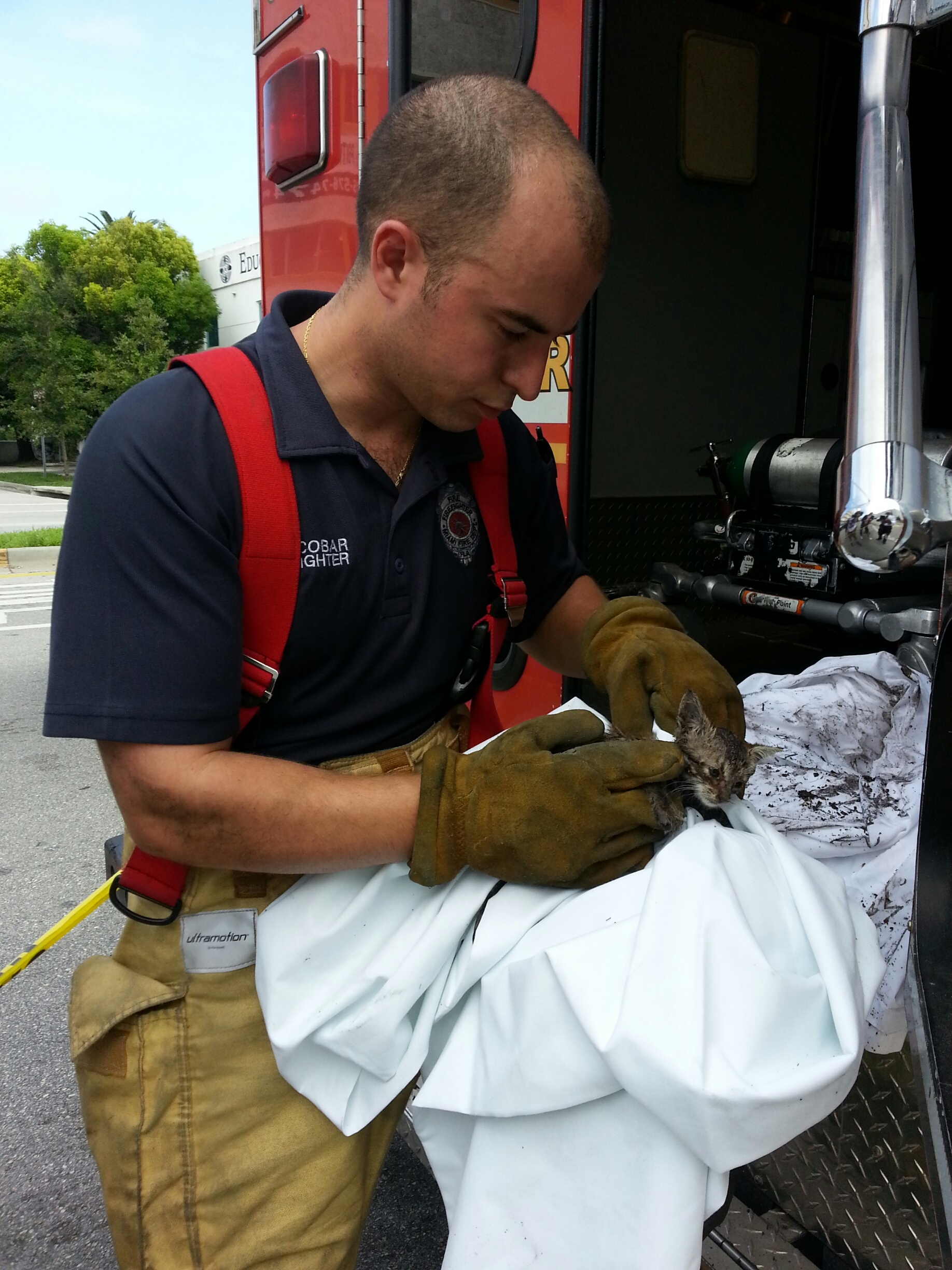 Miami Firefighters Rescue Kitten from Storm Drain - Life