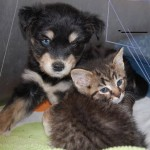 Kitten and Puppy at the Shelter Are Best Friends
