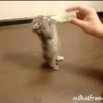 Cats Love Milk Compilation