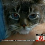 Video and Update on Gypsy, Cat Found 3 Weeks After Moore Tornado