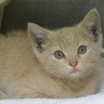 Ford and Fusion: Kittens Rescued from Car Engines Get Adopted