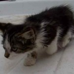 Archaeology Project Volunteers Rescue Kitten from Creek
