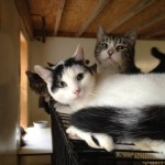 Hope for Hopewell Junction Cats