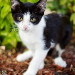 Magic Mike: Kitten Thrown From Moving Car Gets Help
