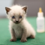 Tiny Homeless Kittens Get a Second Chance