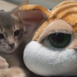 Stuffed Tiger Plays with Kittens