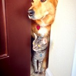 Cat and Dog are Best Buddies