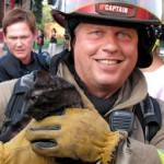 Toronto Firefighters Rescue Cats