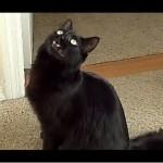 Talking Kitty – Cat vs Ant!