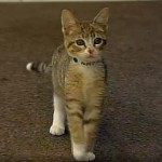 Kitten Found at Yarnell Hill Fire Goes Up For Adoption