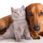 Law to Prohibit Landlords from Requiring Declawing & Devocalization Awaits RI Governor's Signature