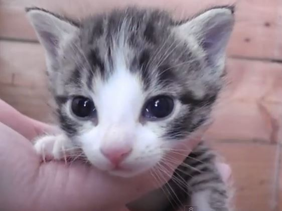 Random Kitten Cuteness