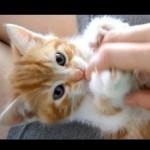 Tiny Cute Fluffy Little Kitten