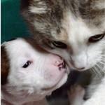 Mama Kitty Lurlene's Puppy Thrives