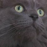 Max the Cat is Reunited with His Family After 3 Years