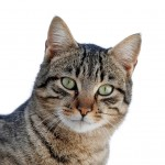 Alley Cat Allies Denounces Report Exaggerating Health Threat from Toxoplasmosis