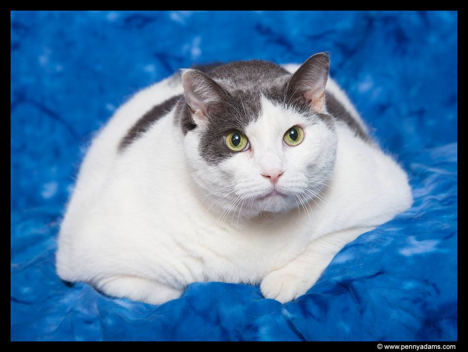 Fat Cat Buddha is Rescued and Gets Help