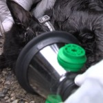 Kitten Revived by Firefighters is Reunited with His Family