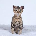 Phoenix Burned Sacramento Kitten, RIP
