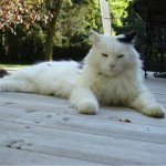 Catnappers Found Through Facebook Post: Missing Cat is Back Home