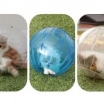 Kittens Play in their Hamster Balls